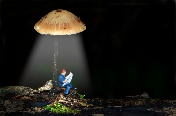 A small figure of a person reads a newspaper under the light of a mushroom.