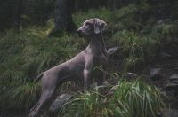 Photo of a dog in the woods.