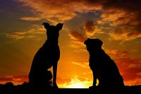 Two dogs silhouetted against a setting sun.